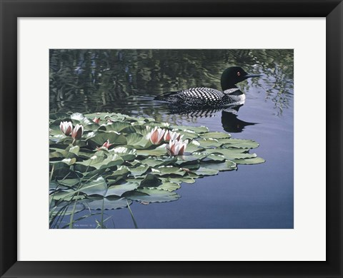 Framed Loon And Lilies Print
