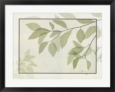 Framed Ghost Leaves II Print