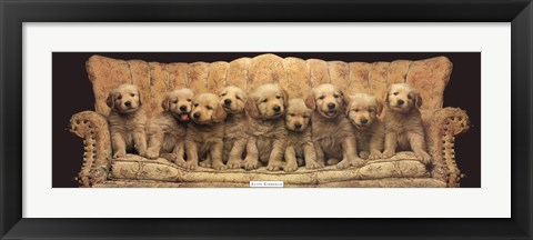 Framed Golden Pup Line-Up Print