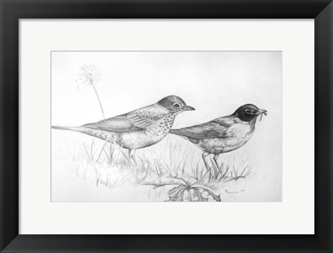 Framed Two Bird Study Print