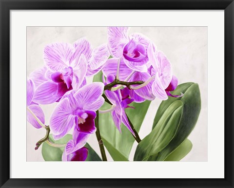 Framed Orchidee Selvagge Print