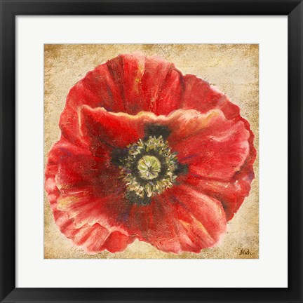 Framed Red Poppy on Gold (without stem) Print