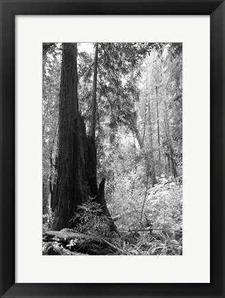 Framed Tree Path II Print