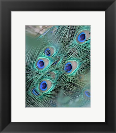 Framed Enchanted Feather II Print