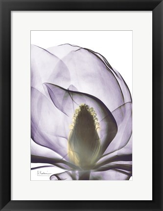 Framed Purple Magnolia A43 Print