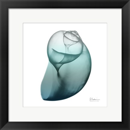 Framed Water Snail 3 Print