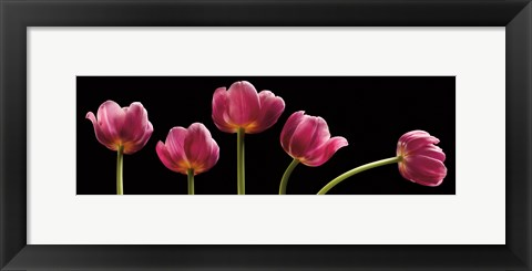 Framed Five Tulips Print