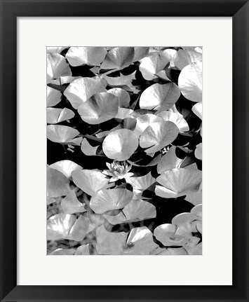 Framed Beach Foliage 5 Print
