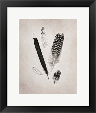 Framed Feather Group II BW Print