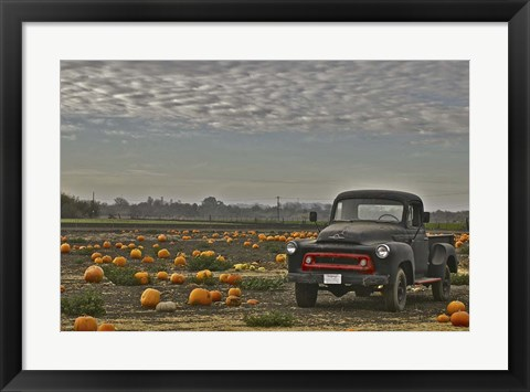 Framed Black Truck In Pumpkin Patch 2 Print