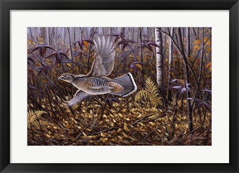 Framed Silver Streak - Ruffed Grouse Print