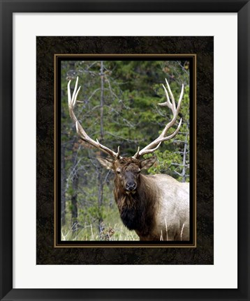 Framed Large Elk Print