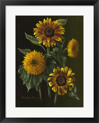 Framed Four Sunflowers Print