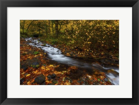 Framed Creekside Colors Print