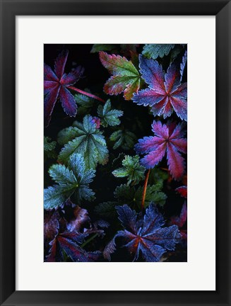 Framed Frosty Fall Print