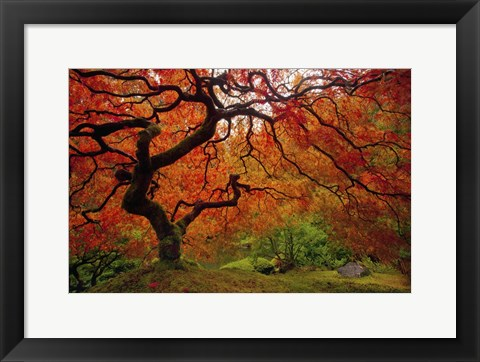 Framed Tree Fire Print