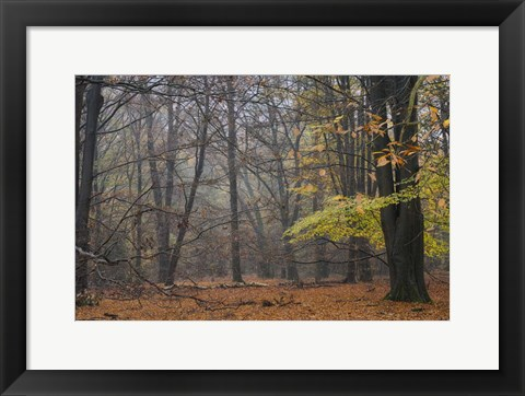 Framed Hazy Wood Print