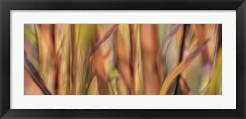 Framed Autumn Grass Scape Print