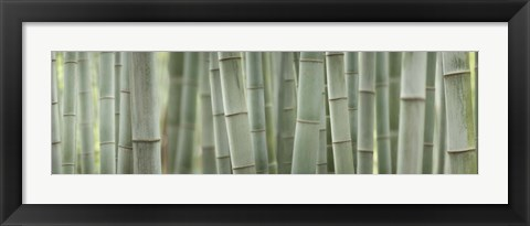 Framed Grey Bamboo Scape Print