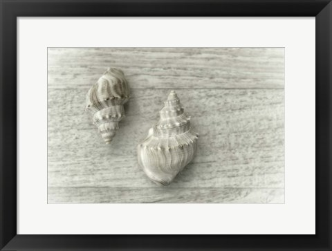 Framed Two Cancellaria Shells Print
