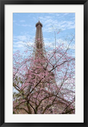 Framed Eiffel Tower with Blossoming Cherry Tree Print