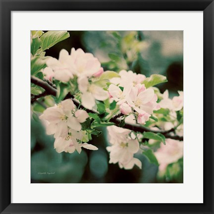 Framed Apple Blossoms I Print