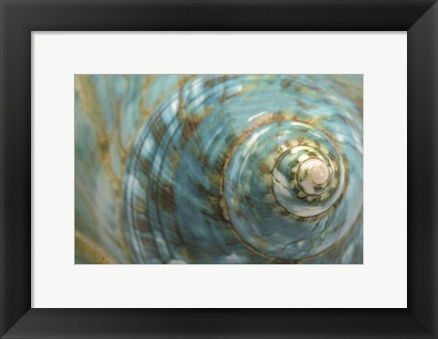 Framed Soft Turbo Shell Print