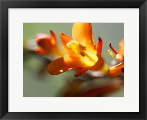 Framed Open Sunshine III Print