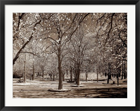 Framed Cherry Tree Park Print