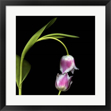 Framed Give Me A Kiss And - Tulips Print