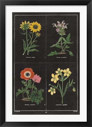 Framed Botanical on Black Chart II Print