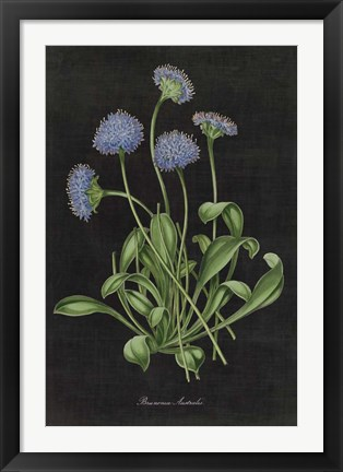 Framed Botanical on Black Chart VII Print