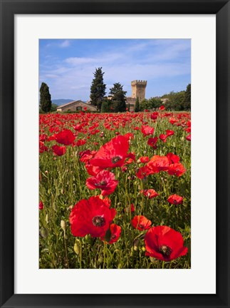 Framed Poppies Close and Personal Print