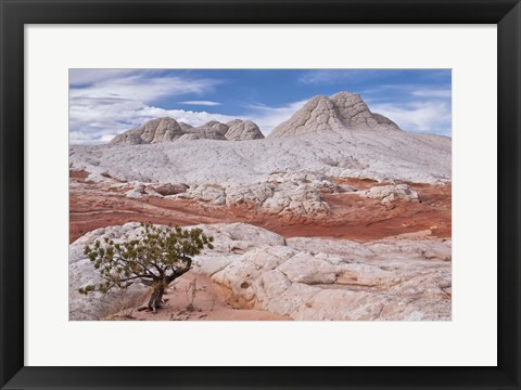Framed Tree on Brain Rocks Print