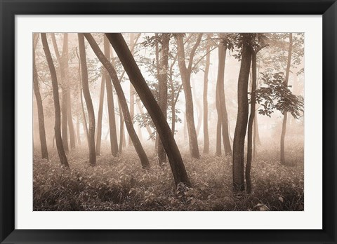 Framed Reticent Woods Print