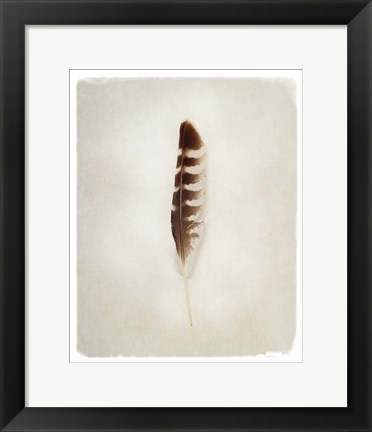 Framed Feather IV Print