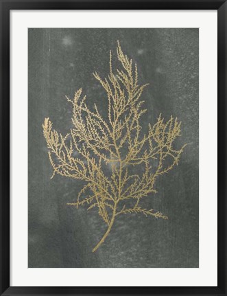 Framed Gold Foil Algae III on Black - Metallic Foil Print