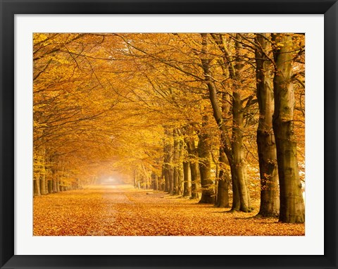 Framed Woods in Autumn Print