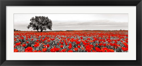 Framed Tree in a Poppy Field 2 Print