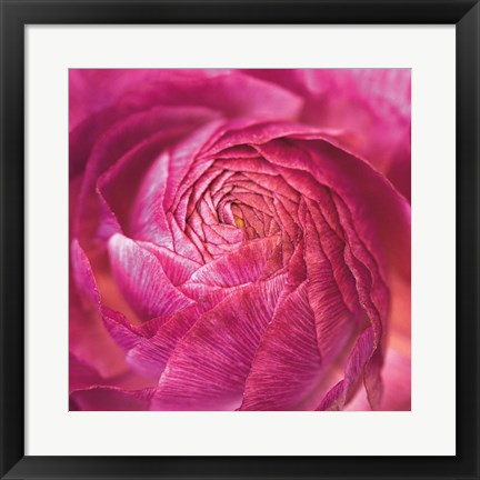 Framed Ranunculus Abstract II Color Print