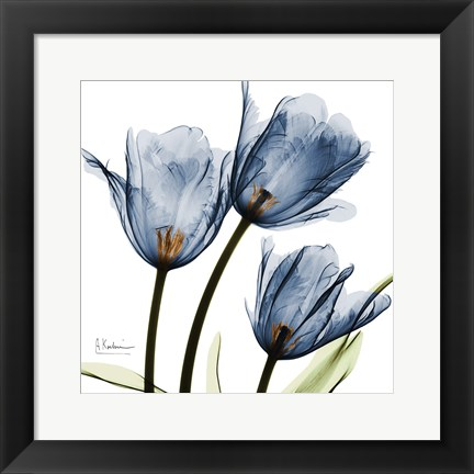 Framed New Blue Tulips C54 Print