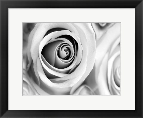 Framed White Noise Rose 1 Print