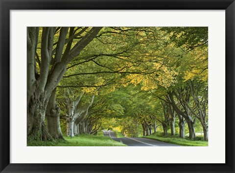 Framed Canopy of Trees Print