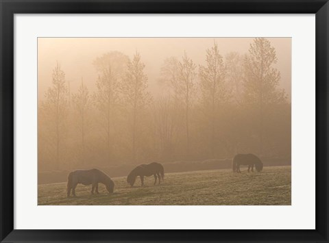 Framed Grazing Ponies Print