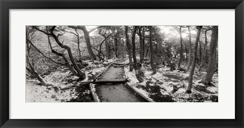 Framed View of a trail through the trees of Tierra del Fuego National Park, Patagonia, Argentina Print