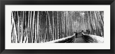 Framed Stepped walkway passing through a bamboo forest, Arashiyama, Kyoto, Japan Print