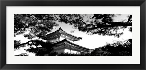 Framed Low angle view of trees in front of a temple, Kinkaku-ji Temple, Kyoto City, Japan Print