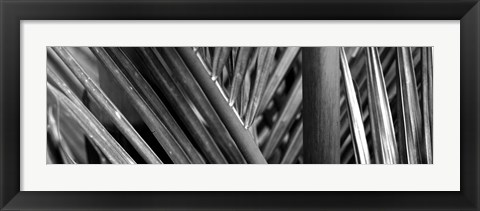 Framed Detail of palm leaves, Hawaii Islands, Hawaii Print