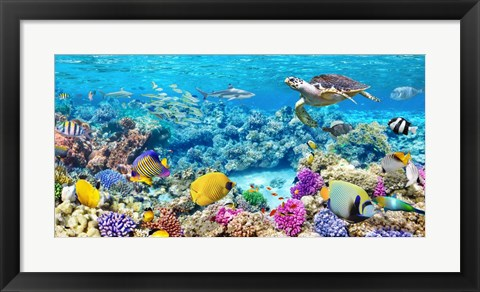 Framed Sea Turtle and fish, Maldivian Coral Reef Print