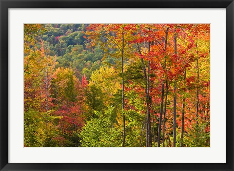 Framed Forest in Grafton, New Hampshire Print